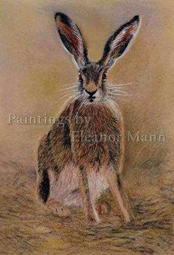Hare painting using pastel pencils by Eleanor Mann