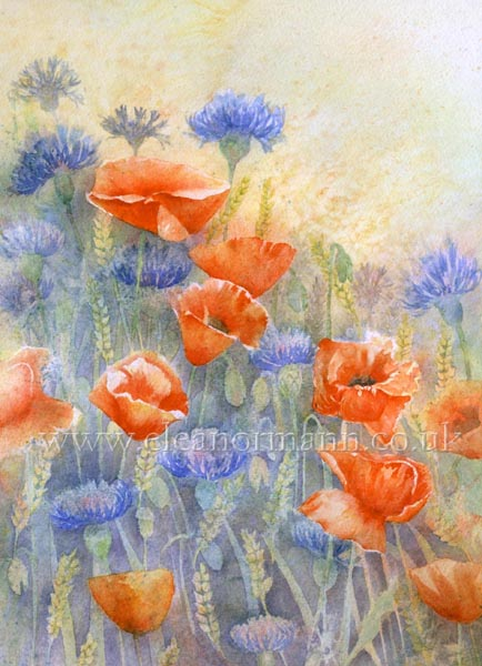 An Original Watercolour painting of Summer Flowers, poppies, cornflowers amongst corn by artist Eleanor Mann