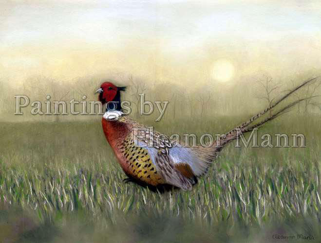 This beautiful cock pheasant on a misty morning is a pastel painting by Eleanor Mann