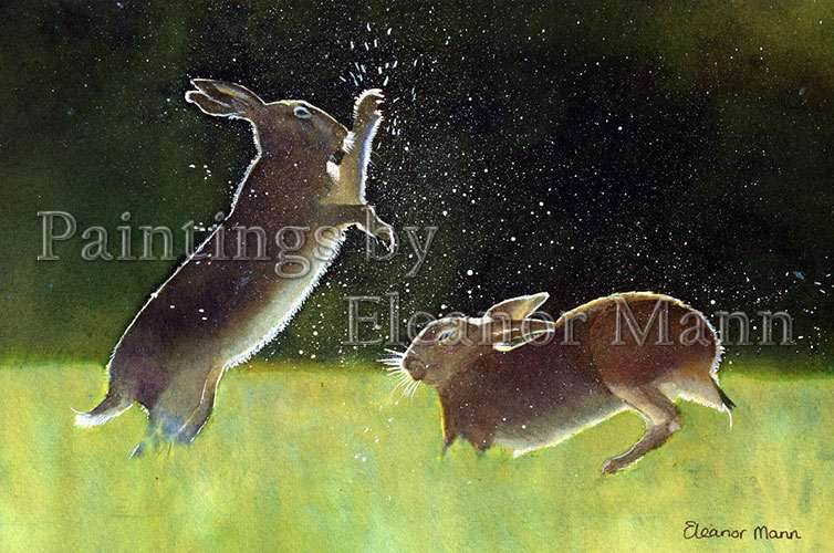 boxing hares is a watercolour picture by Eleanor Mann
