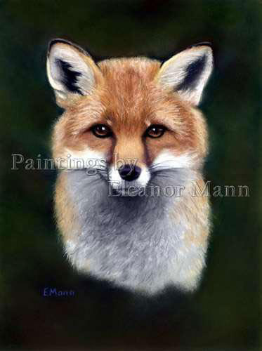 Portrait of a Fox. A picture painted with pastel by Eleanor Mann