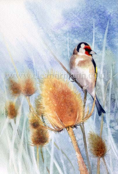 Sunburst - a Goldfinch and Teasel. Original watercolour painting by artist Eleanor Mann for sale. Prints and greeting cards are also for sale.