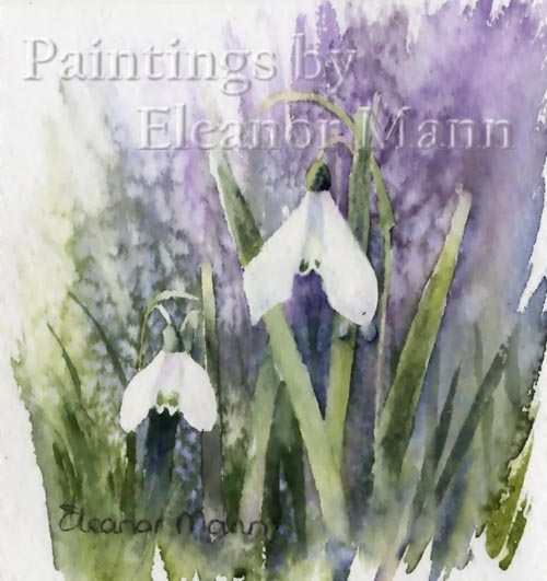 Original Watercolour painting of snowdrops. 4 in a series of 5 by Eleanor Mann
