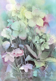 Hellebores (sometimes known as the Christmas rose) is an original watercolour painting. The original is currently for sale. Prints are available.