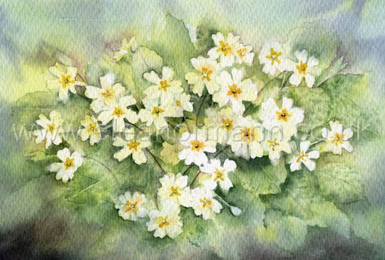 Original watercolour painting of primroses by Suffolk artist Eleanor Mann